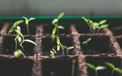 Persevering with Growth Groups