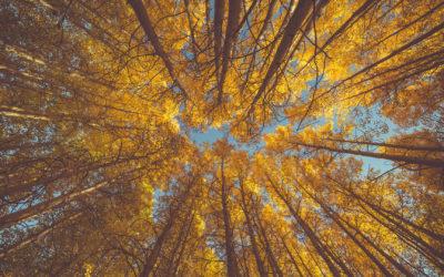 The elusiveness of humility